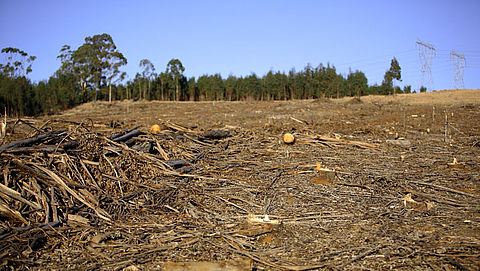 'Levensmiddelenindustrie komt belofte om te stoppen met ontbossing niet na'