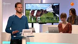Mediateam: Melkvee | Gabor
