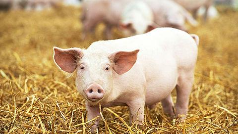 Vijfsterren-status voor 28 varkensboeren }