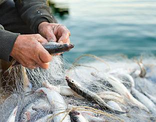 Keurmerk voor kweekvis niet effectief