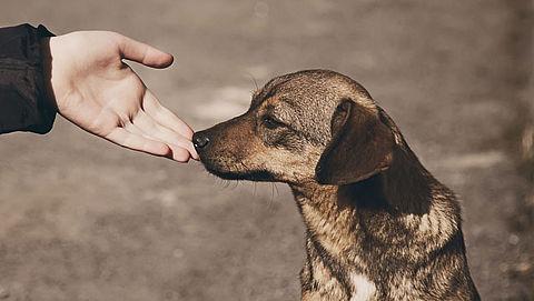 Nederlander haalt vaker buitenlandse zwerfhonden in huis