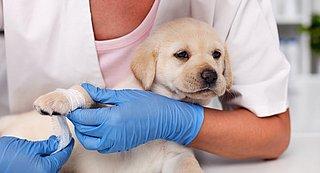 Meldpunt puppyhandelaars moet broodfok tegengaan