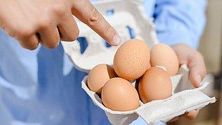 Informatie over dierenwelzijn verdubbelt keuze voor biologische eieren