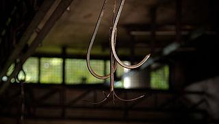 Opnieuw schokkende beelden van dierenmishandeling in Belgisch slachthuis