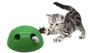 Voorkomt kat-en-muisspelletje ongewenst gedrag bij katten?