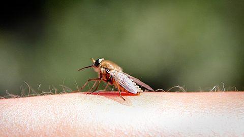 Muggenbulten? Zo ga je de strijd met deze bloedzuigers aan