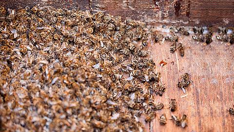 Gewasbeschermingsmiddel voor sierplanten doodt bijen}
