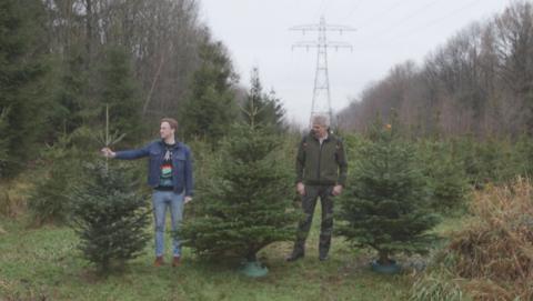 Radar checkt: kerstboom IKEA versus kerstboom van kerstbomenboer}