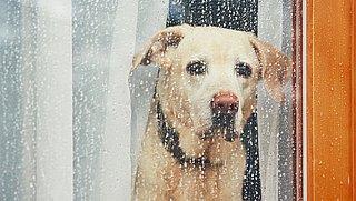 Je hond alleen thuislaten? Zo lang kun je maximaal wegblijven