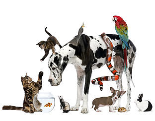 Wat kost een huisdier?