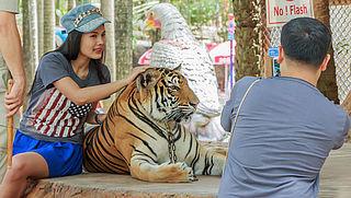 Ondanks bewustzijn veel dierenleed in toerisme