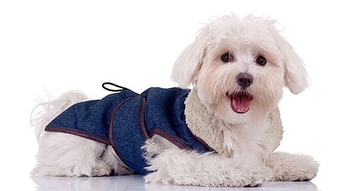 Mag fotostudio foto's verkopen van jouw hond?}