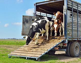 Dierenvervoer ook buiten EU volgens EU-regels
