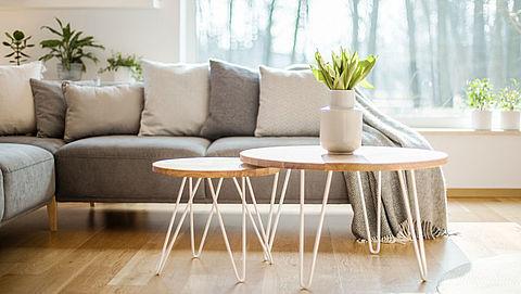 Hoe kun je je kamerplant het best verzorgen?