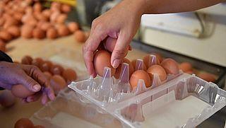Opnieuw fipronil gevonden in Nederlandse eieren
