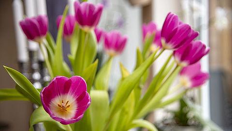 Garantie op bloemen: wat mag je verwachten?