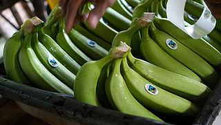 Nederlanders kopen vaker fairtrade-bananen