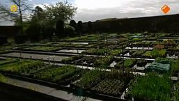 Pesticiden op tuinplanten