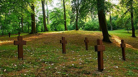 Natuurbegraven veroorzaakt schade aan bodemleven van oude bossen