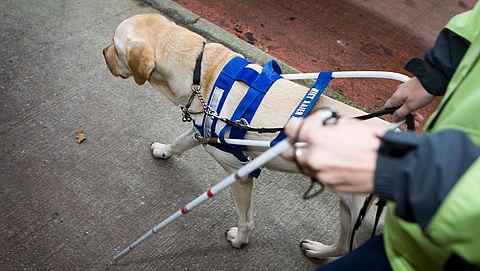 Regels nodig voor inzetten zorgdieren