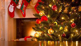 Een ecologische kerstboom, wat is dat precies?