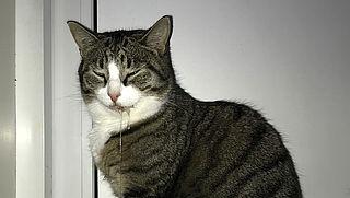 Groene aanslagreiniger Action zeer gevaarlijk voor katten
