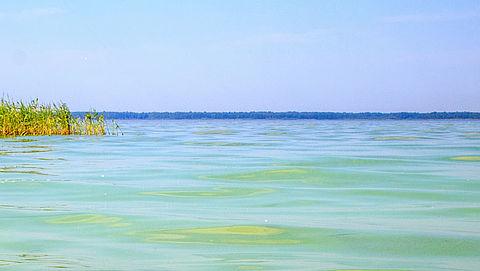 Giftige blauwalg al vroeg gevonden bij zwemgebieden