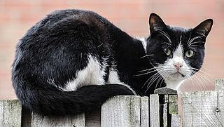 Overlast van kattenverjager: wat kan je doen?