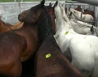 Import Mexicaans paardenvlees gestopt