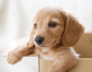 Plasterk: Hondenbelasting rare zaak