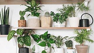 Is kaneel écht goed voor je planten?