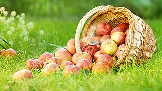 'Appels en peren kleiner en prijziger door droogte'
