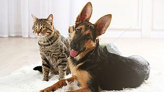 Hoe zorg ik ervoor dat mijn hond of kat alle benodigde voedingsstoffen binnenkrijgt?