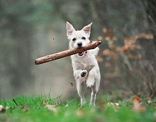 Meerderheid kinderen wil hond aan de lijn