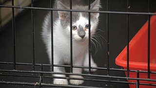 'Coronadieren' massaal gedumpt: asielen en opvangcentra zitten vol