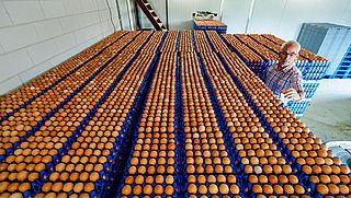 Foodwatch: 'Veel onduidelijkheid over eierkwestie'