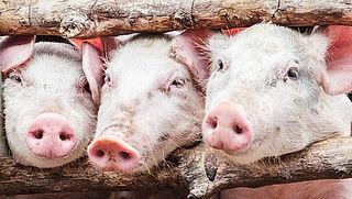 Extra controle dierenwelzijn wegens aanhoudende hitte