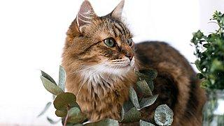 Deze planten zijn giftig voor katten