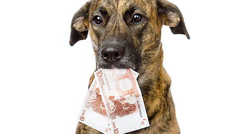 Geen hondenbelasting meer in Rotterdam}