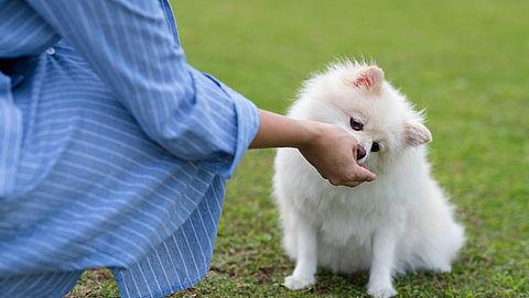 Kan het kwaad om mijn hond of kat te verwennen met dierensnacks?