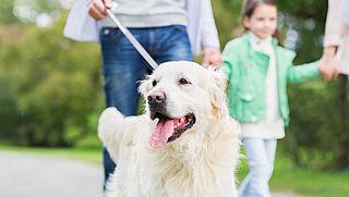 Steeds meer gemeenten schrappen de hondenbelasting