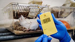 Onderzoek naar minder gebruik van proefdieren