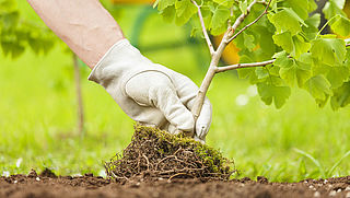 Brabant test stroomopwekking uit levende planten