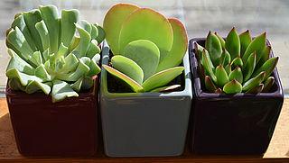 Waar moet je op letten bij kamerplanten?