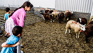 'Schaap of geit gered van illegale slacht moet naar opvang'