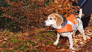 Moeten honden in het donker verlichting dragen?