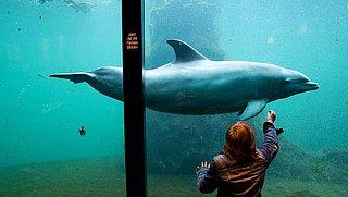 Petitie tegen Dolfinarium: 'Maak einde aan dolfijnvermaak'