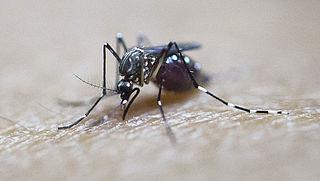 Zikavirus nog steeds gevaar voor vakantiegangers