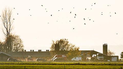 'Rijksuniversiteit Groningen gebruikt wilde vogels voor dierproeven'