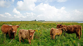 EU steunt Nederlandse milieuprojecten met miljoenen